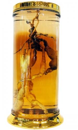 Bình Ngâm Rượu MS1 – 73 lít 6.650.000
