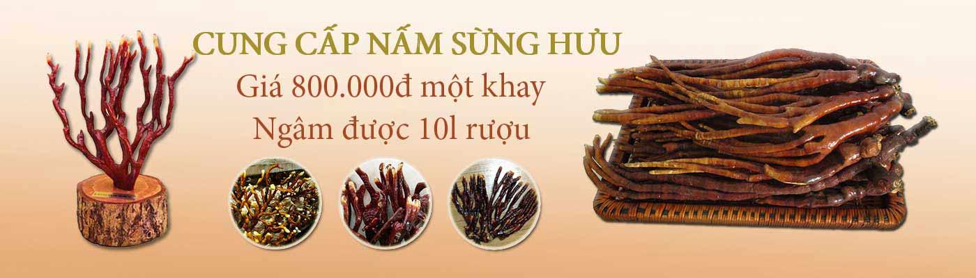 Hộp Nấm Linh Chi Sừng Hươu Nông Lâm